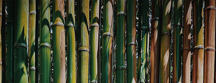 Verschillende kleuren bamboe